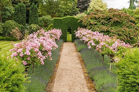 Lower House 450 - The National Garden Scheme - Find An Open Garden In Surrey